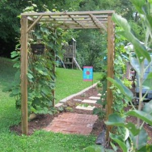 The story of our grape arbor