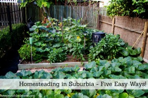 Homesteading in Suburbia – Five Easy Ways!